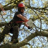 Nene Valley Tree Services Ltd - Andy Chainsaws branch Up a tree   clear image- For Web
